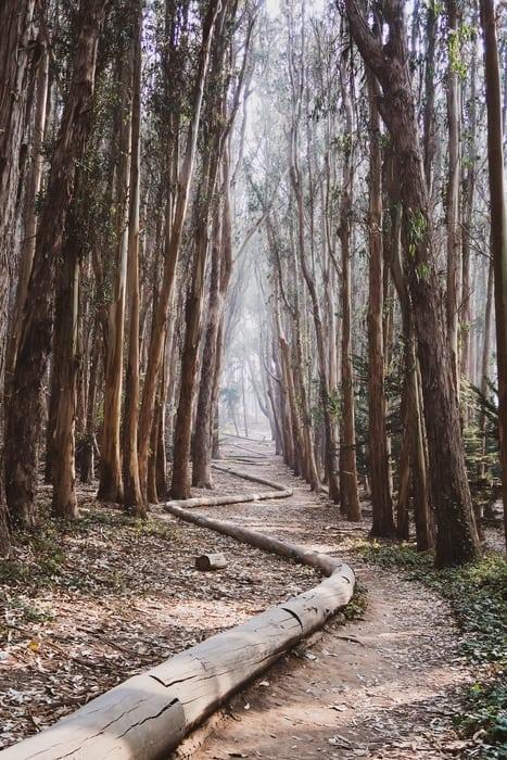 Presidio National Park, something to visit in San Francisco