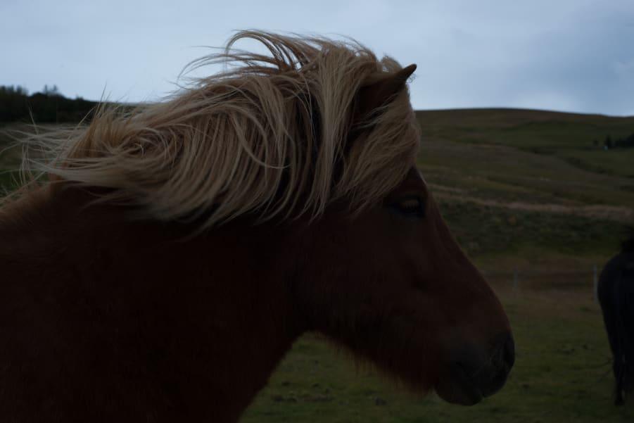 imagen subexpuesto de un caballo