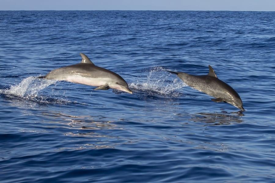 Ver delfines en libertad en Isla de Lobos, Fuerteventura
