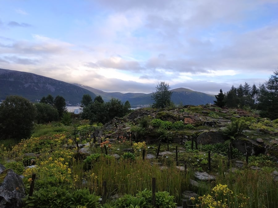 Arctic-Alpine Botanic Garden, a place to visit in Tromso
