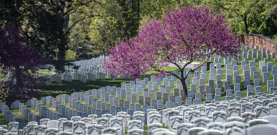 Cementerio Nacional de Arlington, sitios que visitar en Washington D.C.