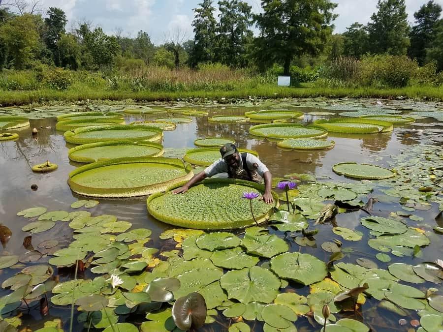 Kenilworth Park & Aquatic Gardens, un lugar bonito que visitar en Washington