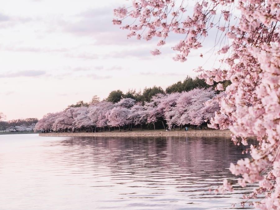 Cuenca Tidal, lugares que visitar en Washington