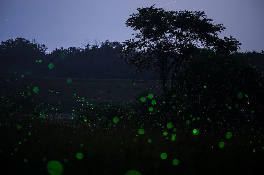 consejos para fotografiar luciérnagas