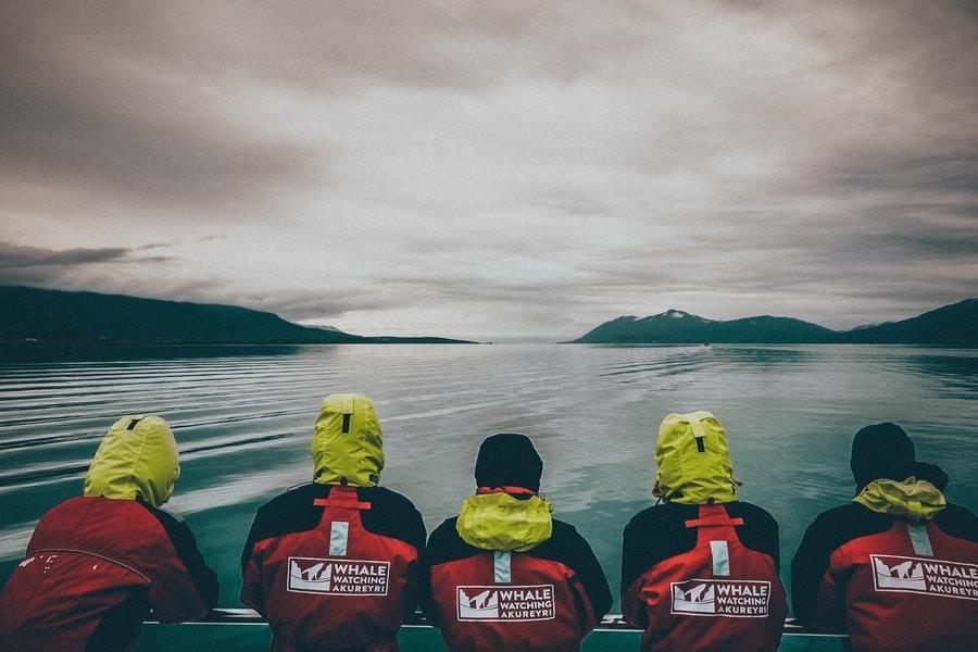 Akureyri Iceland whale watching