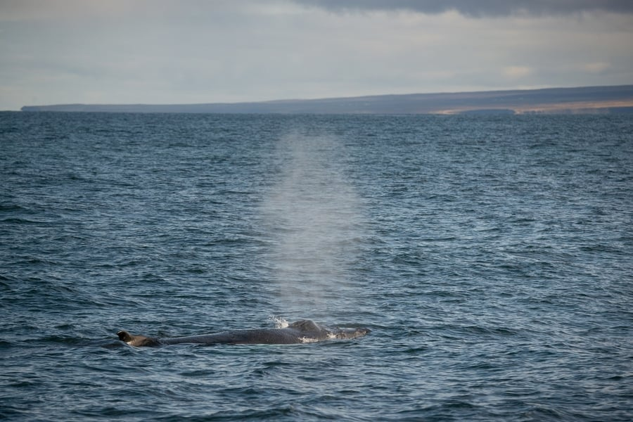 How long are whale watching tours in Húsavík