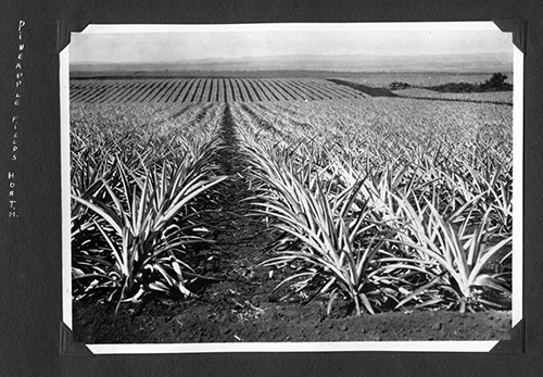 Pineapple fields outside of Honolulu. Photo courtesy of San Diego Air and Space Museum Archive.