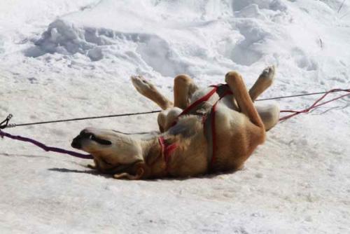 Photo courtesy of Mountain Musher Dog Sled Rides