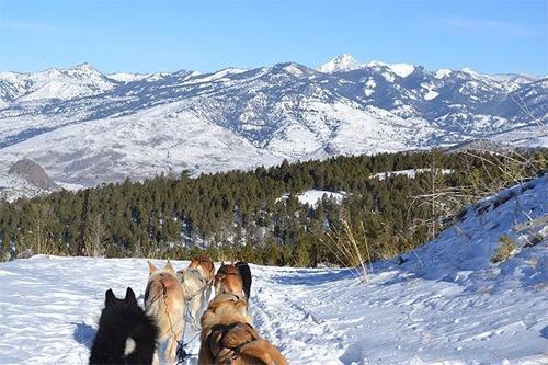 Photo courtesy of  Yellowstone Dog Sled Adventures