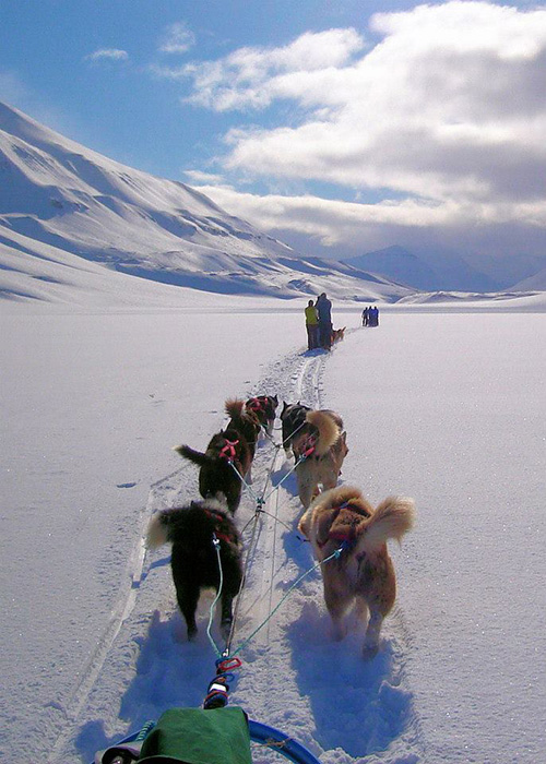 Photo courtesy of Wintergreen Dogsled Lodge.