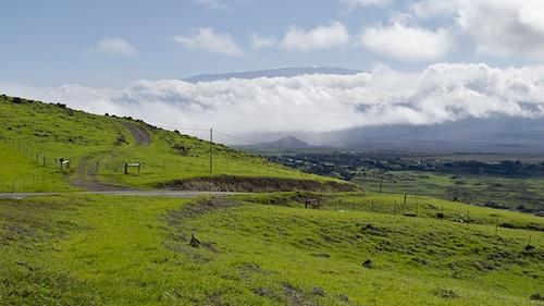 Kohala Mountain Road. Courtesy of Andrew K. Smith.