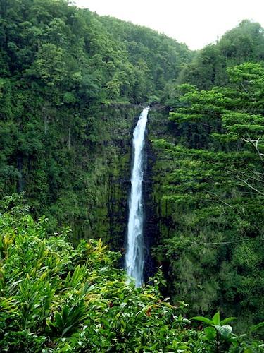 Akaka Falls. Courtesy of Jean Synodinos.