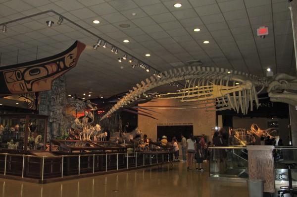 Various Exhibits in the Milwaukee Public Museum
