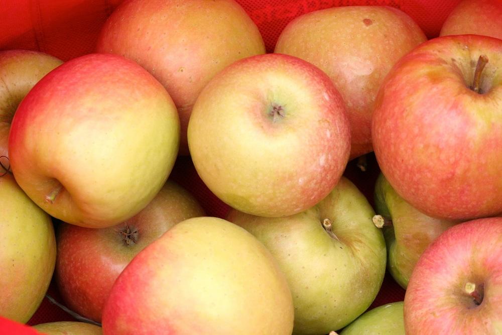 Apples. Courtesy of Vijay Chennupati.