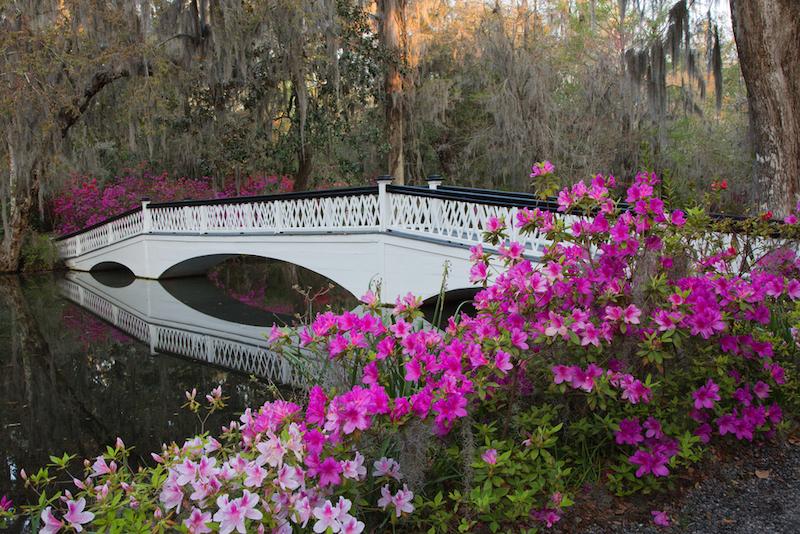 Visit the Magnolia Plantation