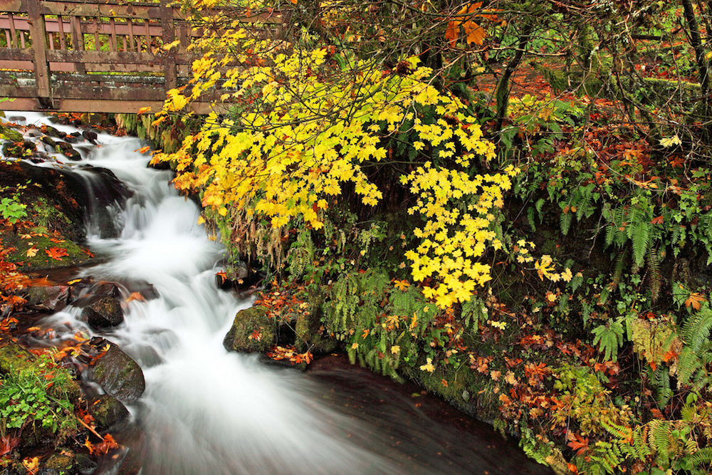 Wahkeena Creek and it's gorgeous fall foliage is just one of the many jaw-dropping sites along Oregon's Columbia River Gorge. Credit Ian Sane/Flickr.