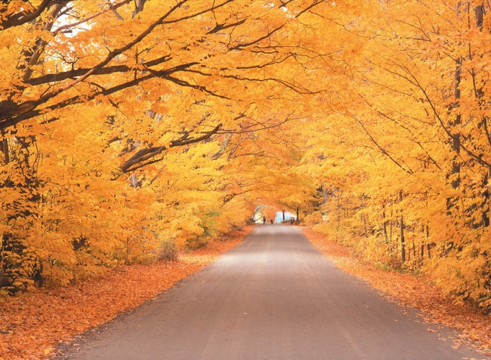 We'd stow away for a trip to Vermont's Green Mountain Byway - just look at that bright orange fall foliage. Credit: GoStowe.com.