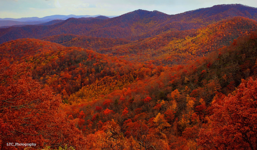 Maybe they should rename it the Red Ridge Parkway, thanks to all those vibrant red trees. Credit: Sarah Zucca/Flickr.
