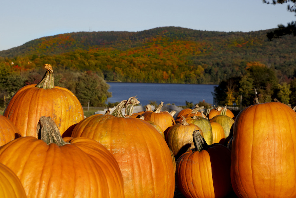 """The Berkshires: This is about as """"fall"""" as it gets. The pumpkins are not the focus of this image - just look at those rolling mountains covered in gorgeous fall foliage. Credit Ogden Gigli via Massachusetts Office of Tourism/Flickr."""