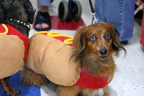 Photo: Flickr | David K, Hot Dog