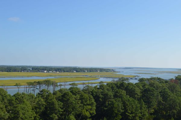 A view of the marshes. Photo credit: Alexandra Olsen