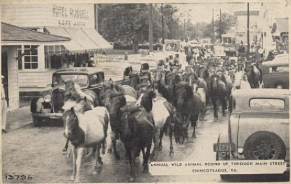 Picture side of 1941-postmarked postcard depicting the Chincoteague ponies. Public Domain, via Wikimedia Commons.