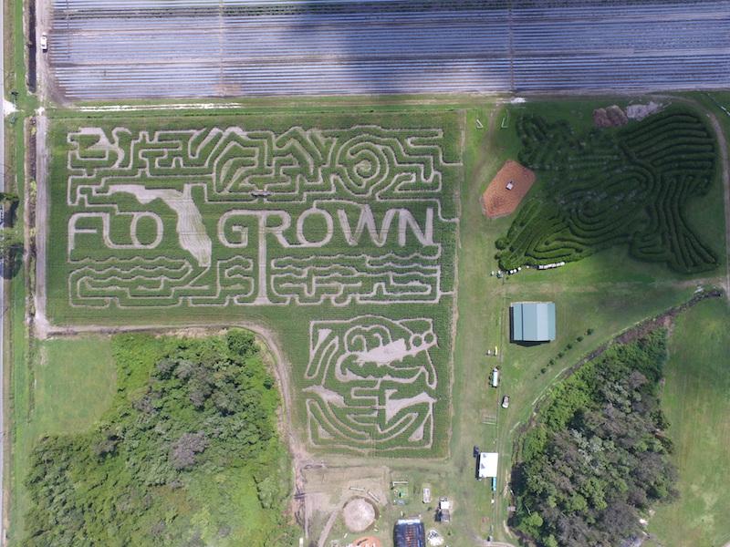 Scott's Maze Adventures' winding corn mazes, as seen from above.