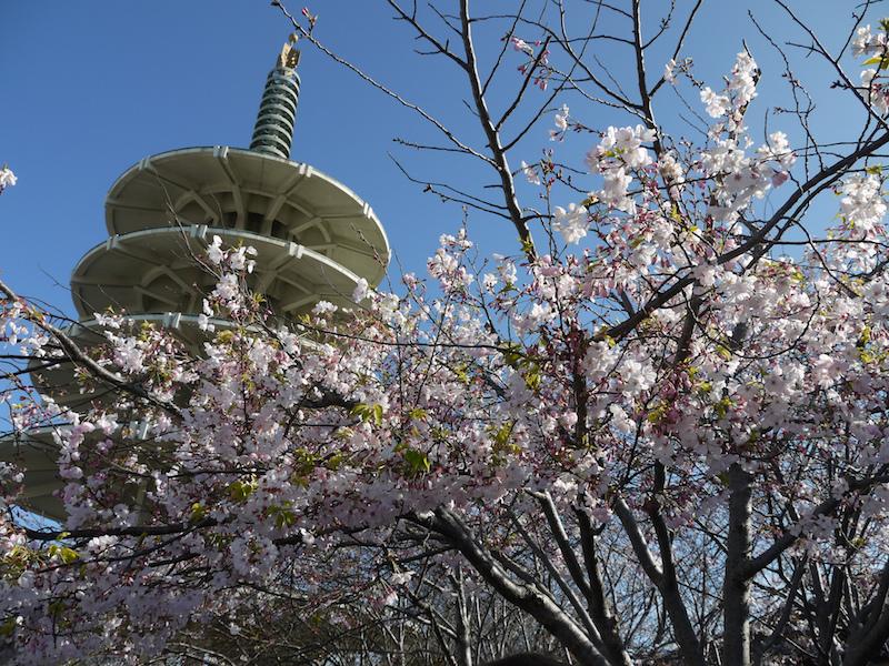 Japantown | Flickr CC: kennejima