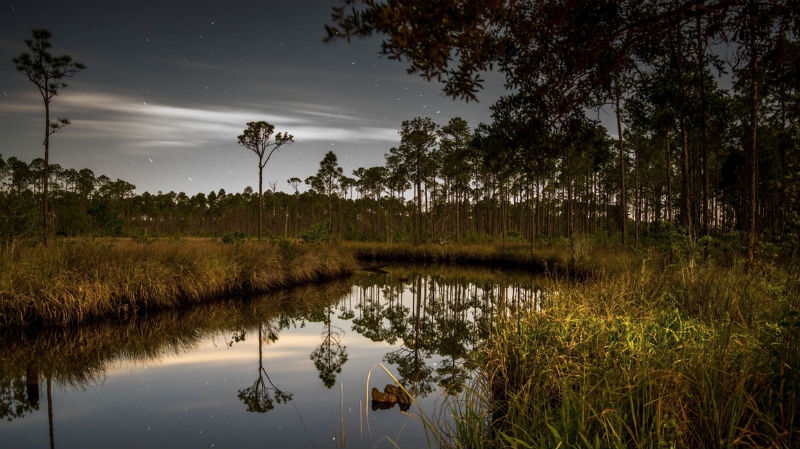 Florida Panhandle, Tate's Hell State Forest