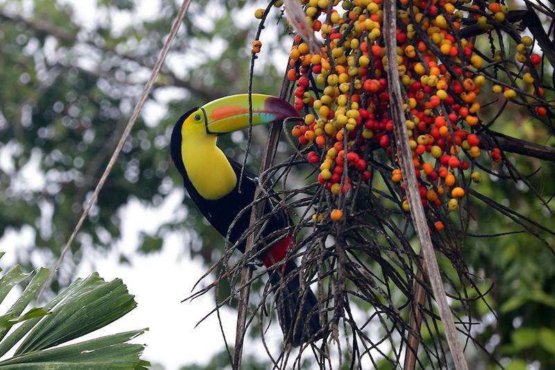 Birdwatching at San Ignacio Resort Hotel