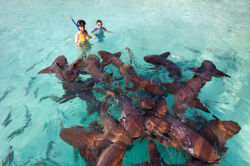 Swimming with nurse sharks