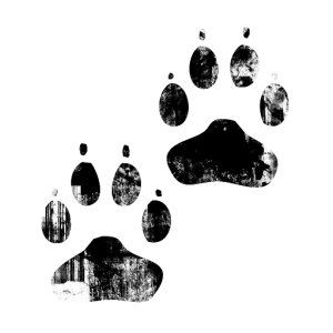 010798-black-ink-grunge-stamp-texture-icon-animals-paw-print3