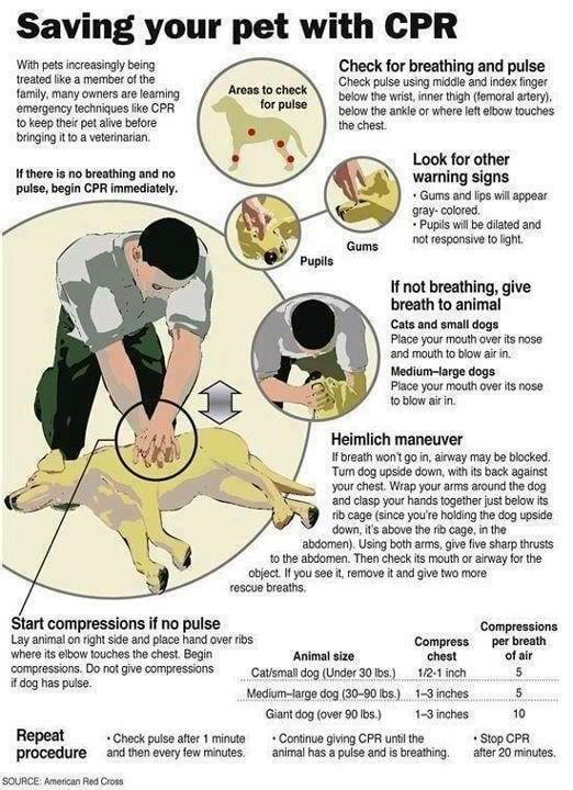 heimlich for dogs