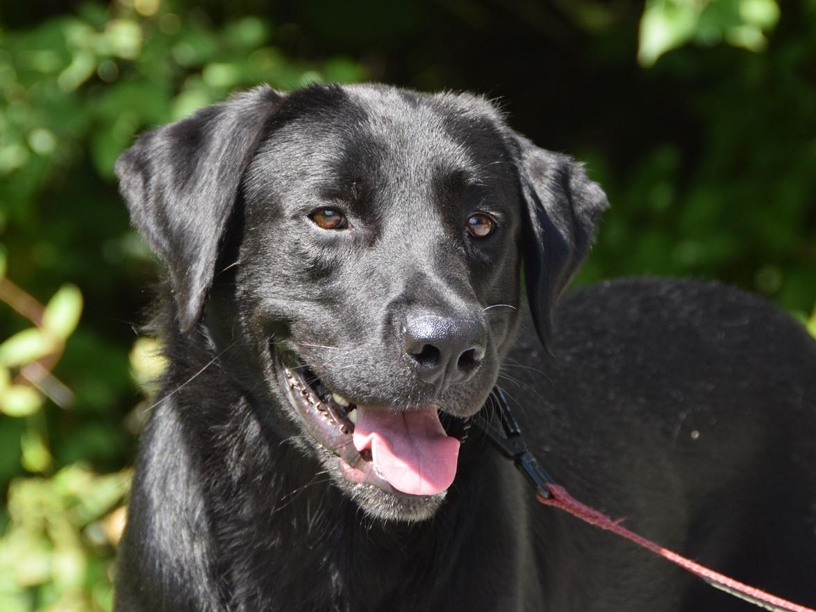 Rufus-3 - Cincinnati Lab Rescue