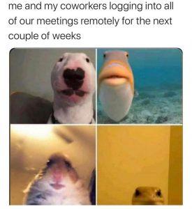 Remote working - virtual meetings