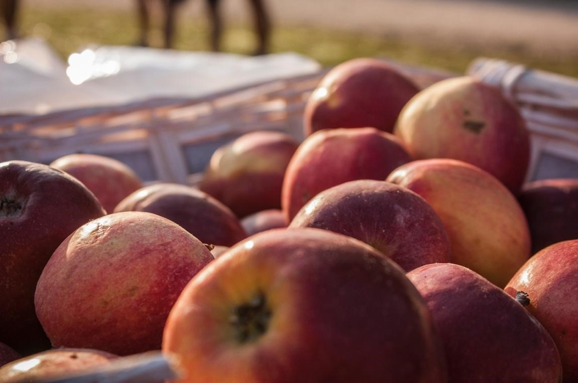 Bad Apples: What to Do About Unprofessional Competition