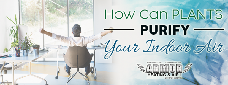 How Can Plants Purify Your Indoor Air