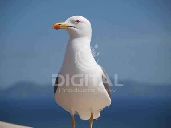 Birds-005