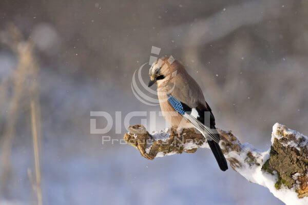 Birds-008