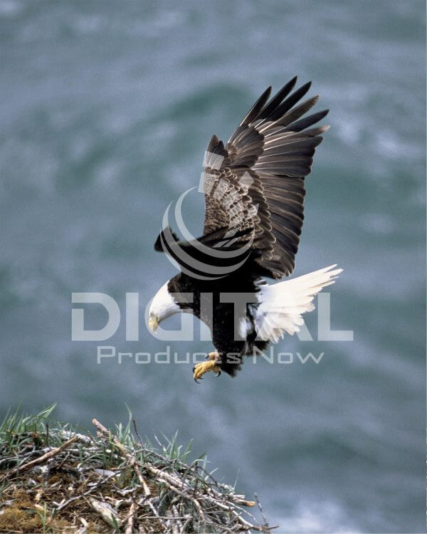 Birds-009
