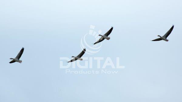 Birds-010