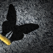 This photo shows a yellow caterpillar with its shadow as a butterfly to signify growth. Insourcing talent gives employees opportunities for transformational growth.