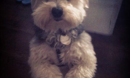 Enzo, world class greeter