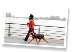 NYC Dog Runners - Downtown Pets | NYC dog walkers
