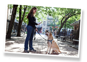 NYC Dog Trainer - Downtown Pets | NYC dog walkers