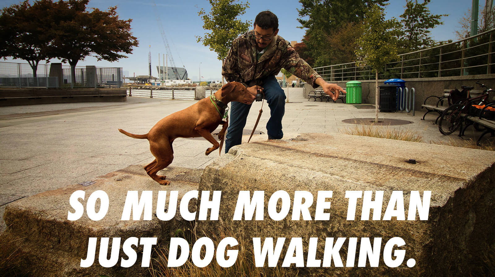 dog walking, dog training, pet sitting