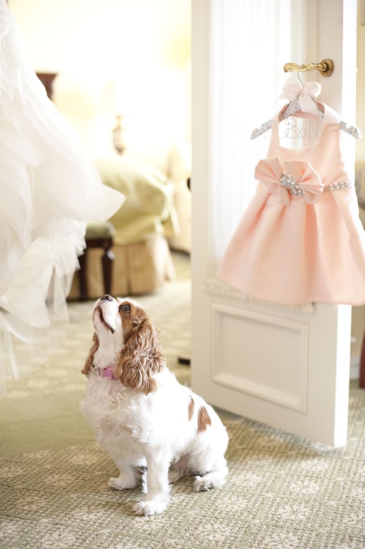 A Glamorous Silver & Blush Beach Wedding via TheELD.com