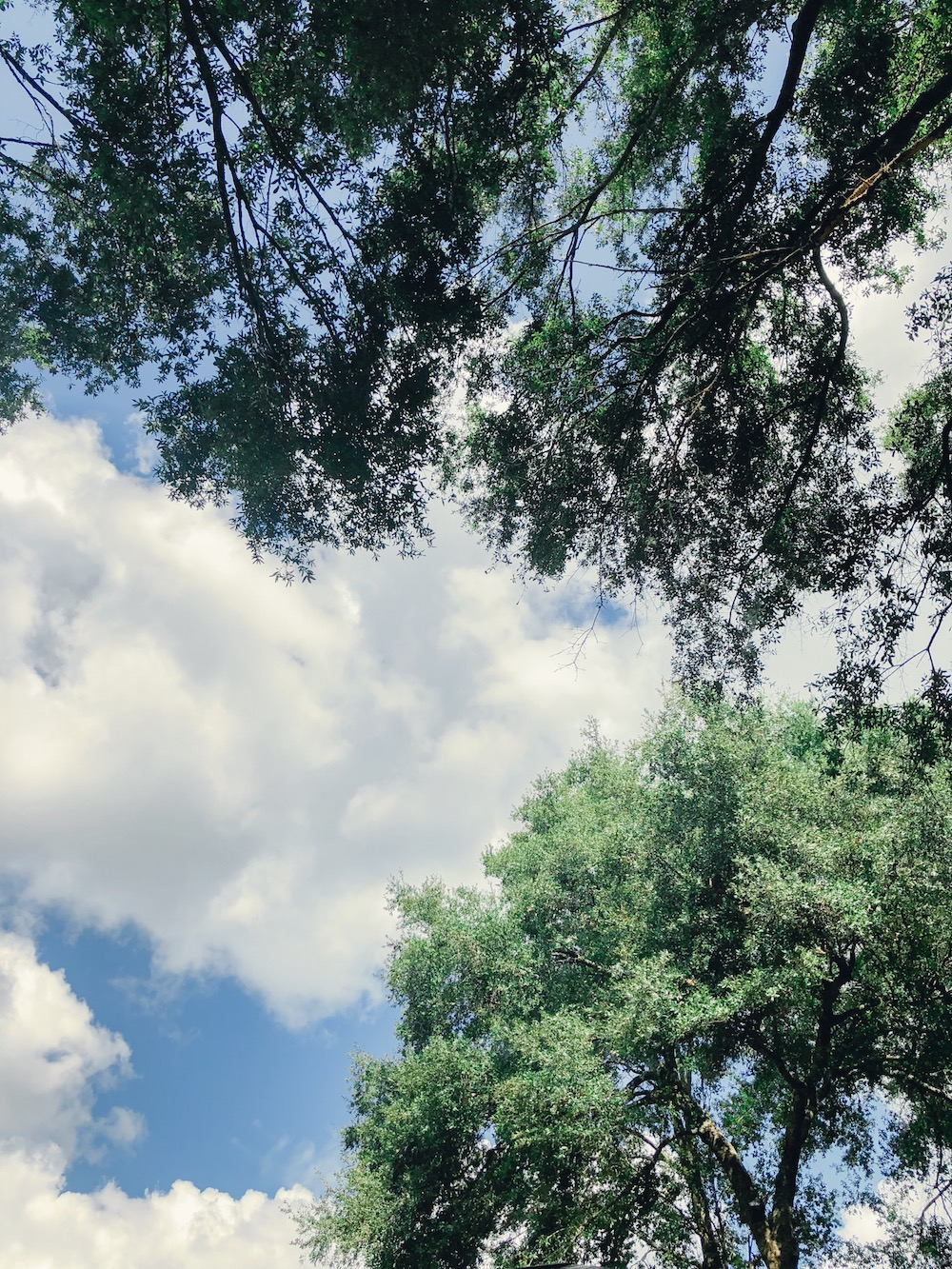 [FOR PROS] Changes... and how a tree gave me the courage to share them. via TheELD.com