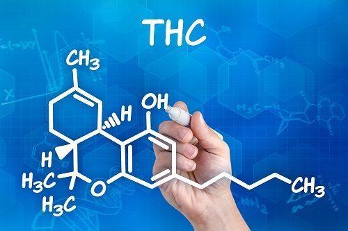 THC cannabis