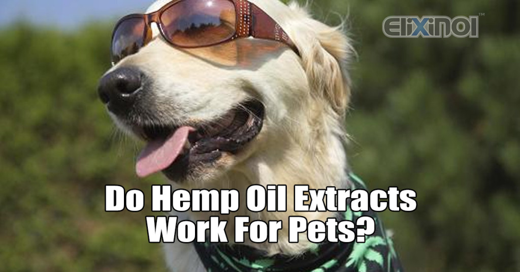 Hemp Oil Extracts for Pets